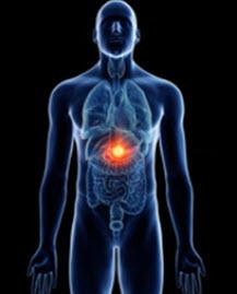Endocrine Function